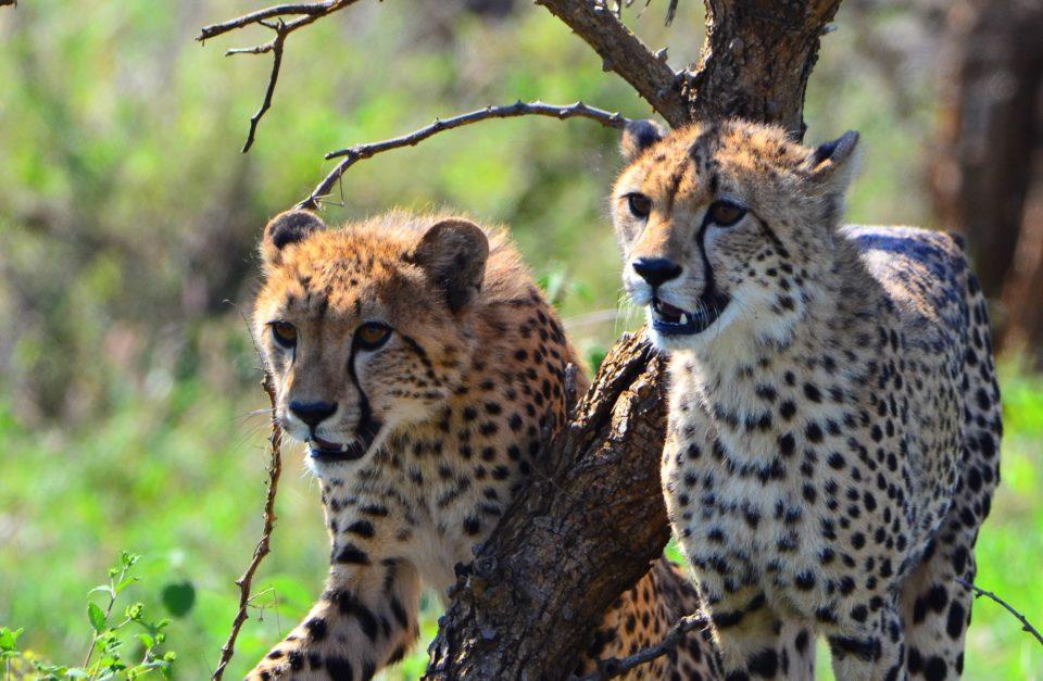 Best Of Kruger Park