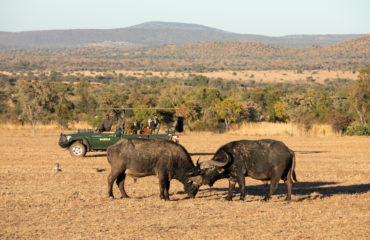 Mabula Game Lodge - Wildlife 14