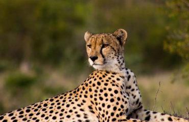 2018-extraordinary-safari-plains-17