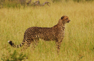 clifftop-lodge-safari-13